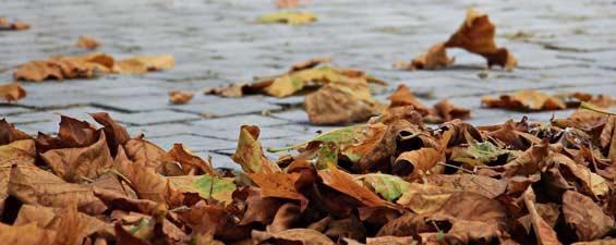 L'automne et les vents violents